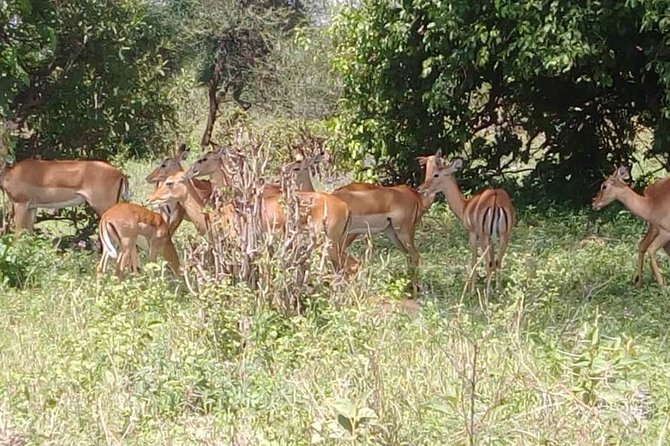 3 Days 2 Nights Safari to Mikumi National Parks by bus transfer photo 8