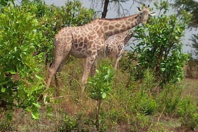 3 Days, Mikumi National park safari, by private transfer