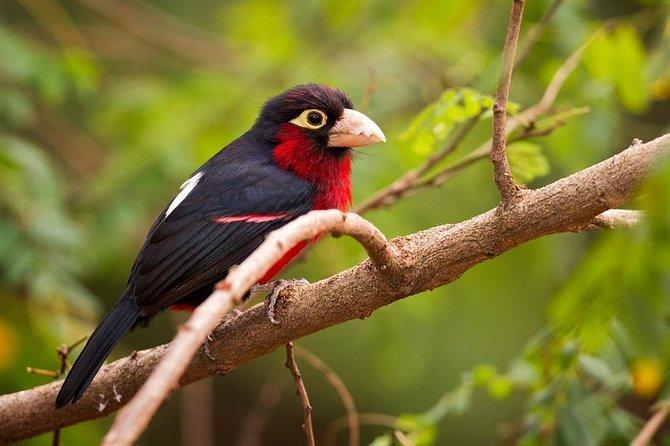 Bird-watching around lake kivu