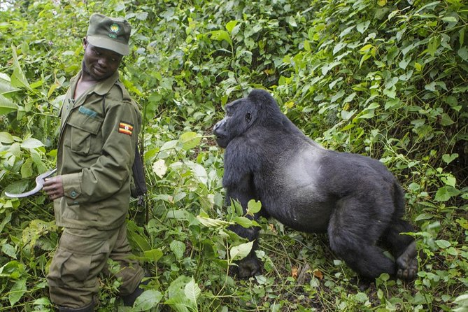3 Days Gorilla trekking in Bwindi National Park