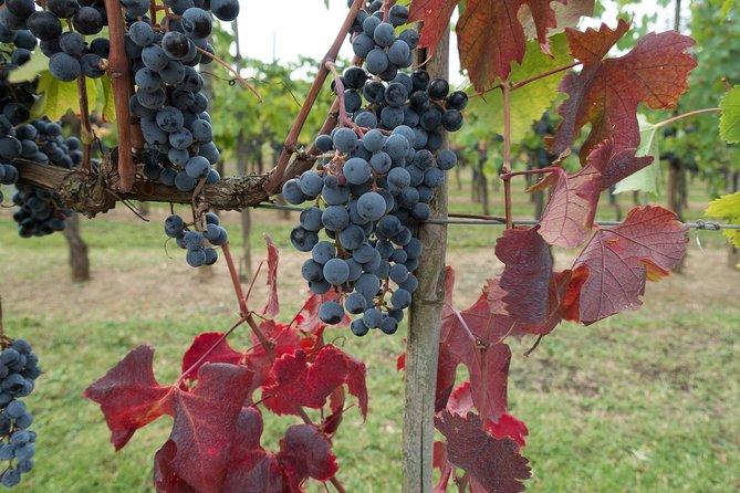 Semi-Private Wine Tasting Tour: Sunset in Chianti