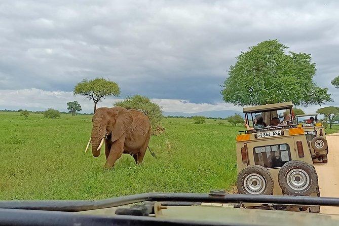 Tarangire National Park Day Trip from Arusha