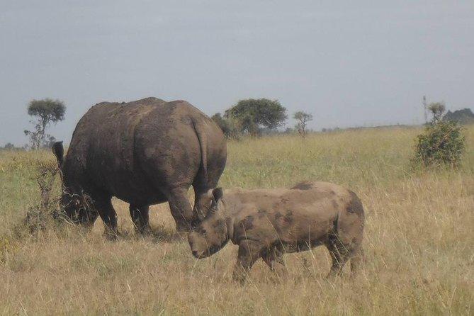 Nairobi park/Elephant/ orphanage/Giraffe centre/Lunch at Carnivore restaurant