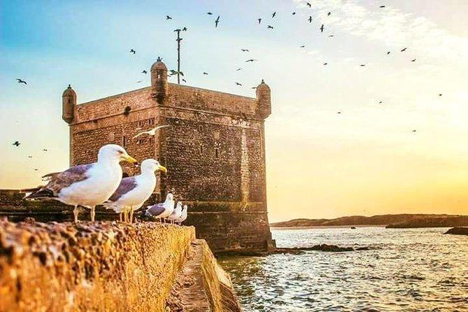 Day trip to Essaouira ( portugal city ) from agadir