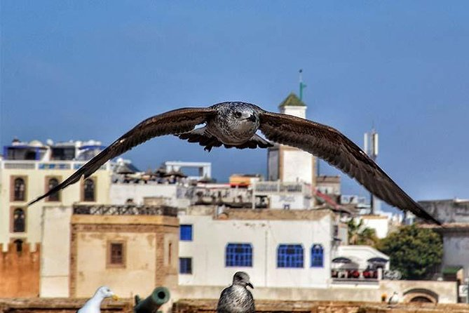 Day-Trip to Essaouira