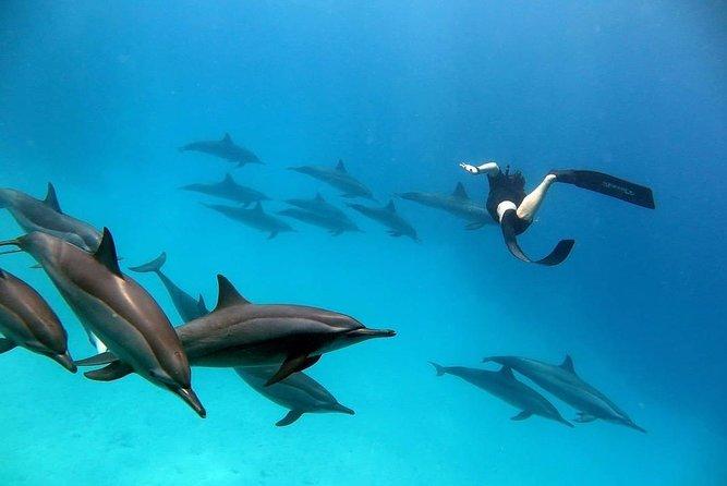 Dolphin House Sea Trip - Hurghada