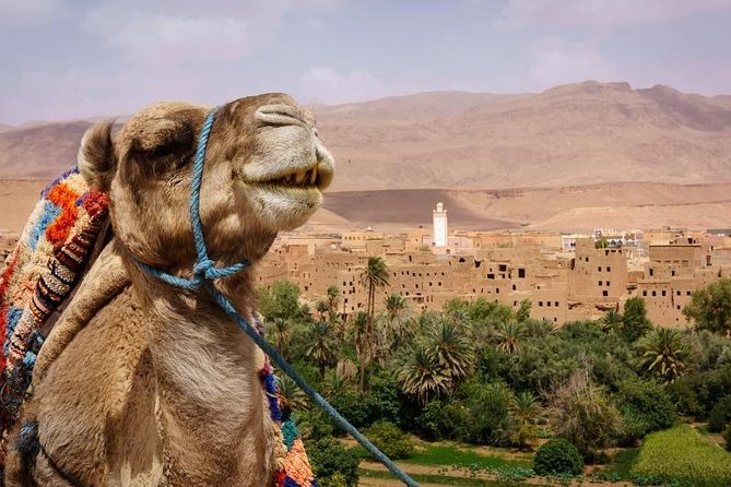 Ait ben haddou and Ouarzazate day trip from Marrakech