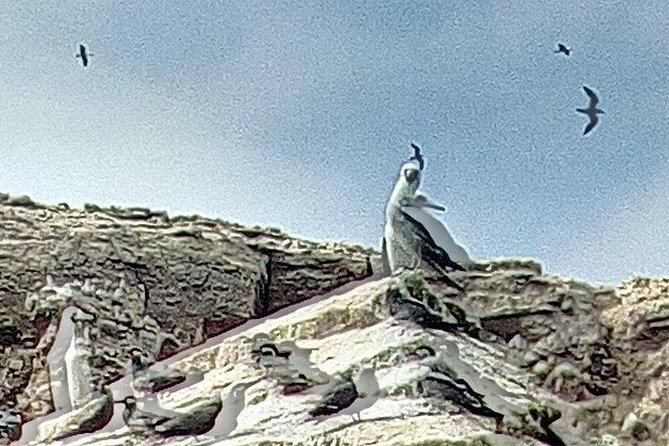 Excursion Ballestas Islands and National Reserve Paracas