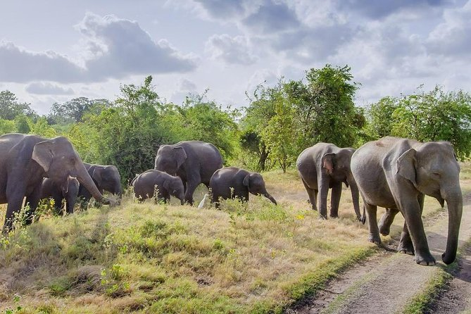 Minneriya National Park Safari from Dambulla photo 9