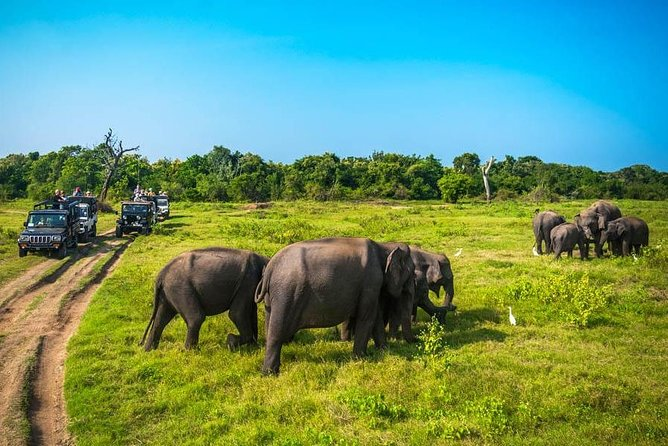 Minneriya National Park Safari from Dambulla photo 2