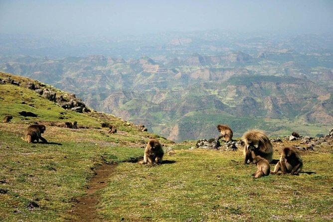 8 Days Trekking Simien Mountains