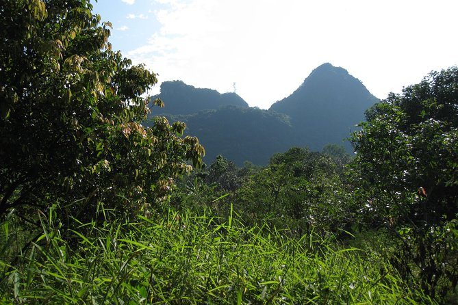 Full day hikking in Jungle of Cat Ba National park photo 25