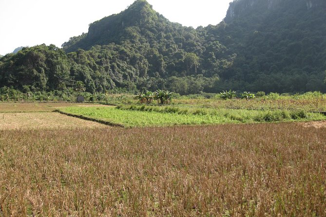 Full day hikking in Jungle of Cat Ba National park photo 22