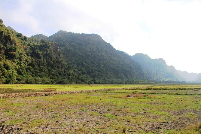 Full day hikking in Jungle of Cat Ba National park photo 3