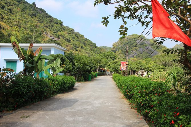 Full day hikking in Jungle of Cat Ba National park photo 8
