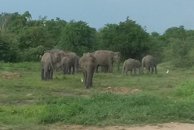 Private Tour : Udawalawe National Park