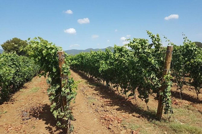 Wine Tasting Experience in San Gimignano Area with 4 wines in a typical winery