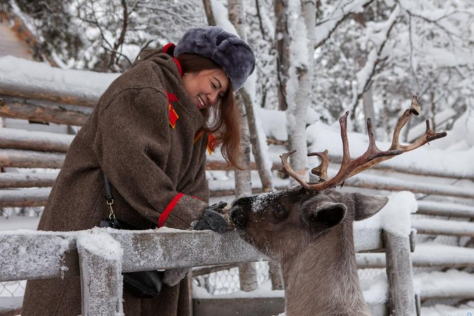 FEED A REINDEER. Get to know reindeer and northern traditions