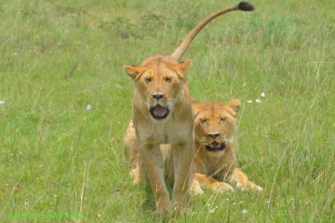 Maasai Mara Overnight Safari - Daily Departure