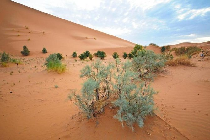 Merzouga desert tour 3 days from Marrakech to Fes photo 9