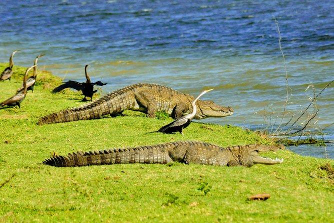 Bundala National Park, Private Safari Tour