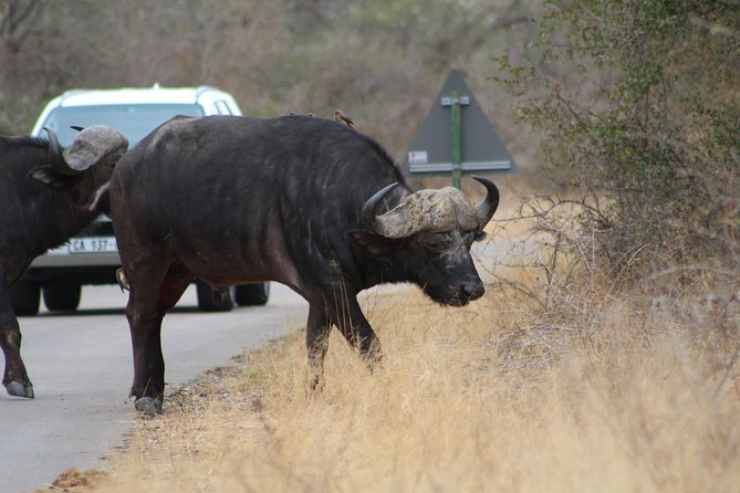 5 Day Kruger Park Budget Safari