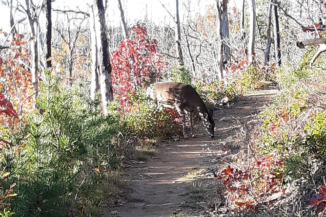 Deer on the trail!