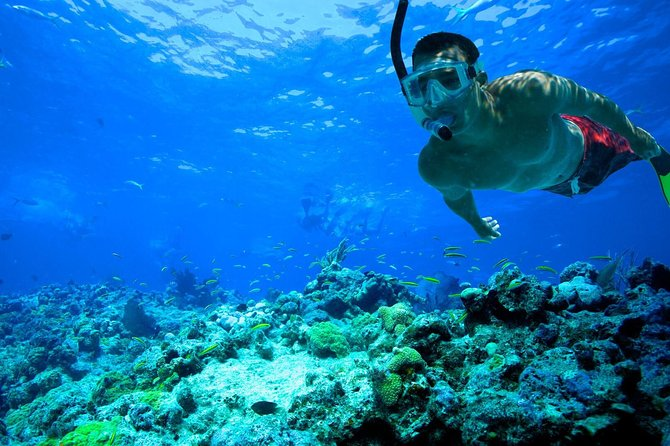 Basic Snorkel Experience in Cancun photo 2