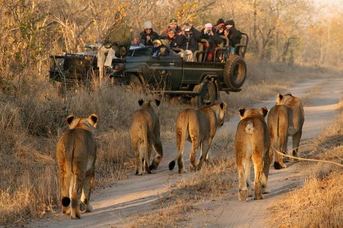 Cape Town South Africa-2 Days Overnight Big Five Safari Tour Game Reserve