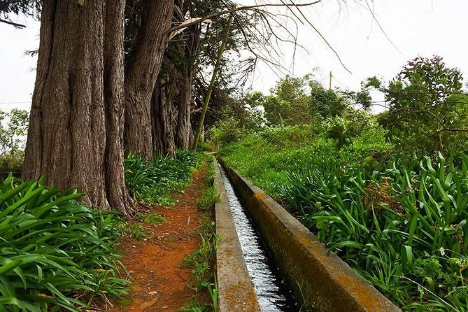 Amazing Levada Nova - Rota do Azucar Walk photo 2