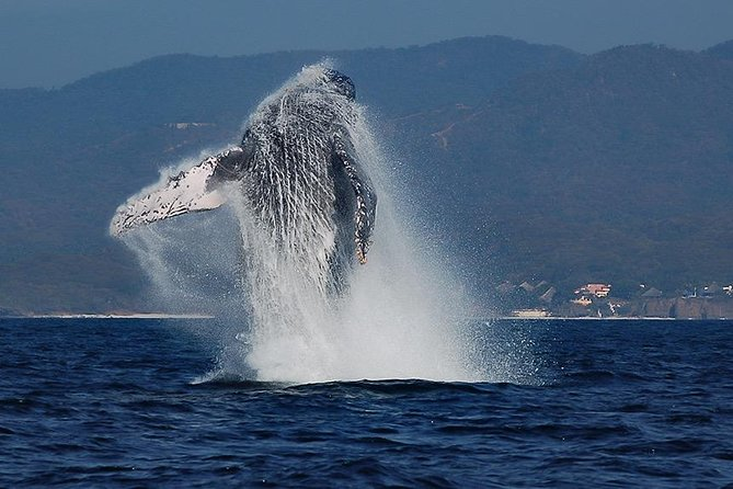 Whale & Dolphin Watching with a Biologist in Puerto Vallarta