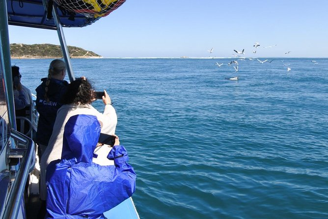 Dolphin and Seal Watching Eco Boat Cruise Mornington Peninsula photo 11