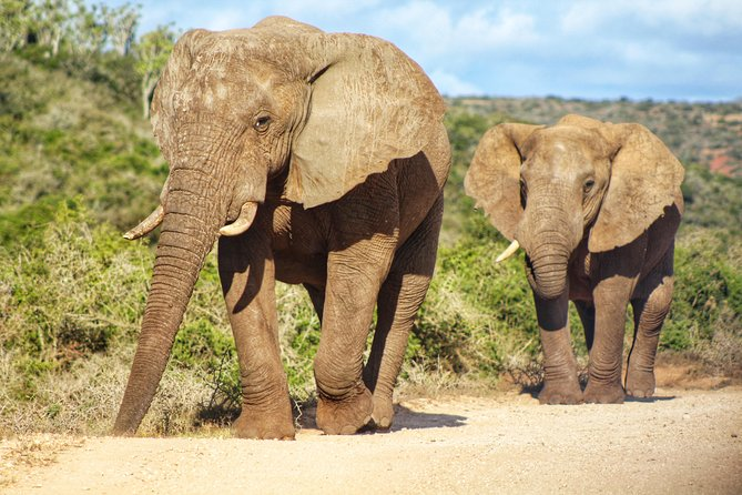 Addo Elephant National Park Full Day Safari photo 28