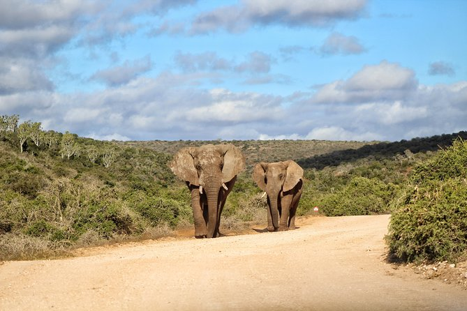 Addo Elephant National Park Full Day Safari photo 20