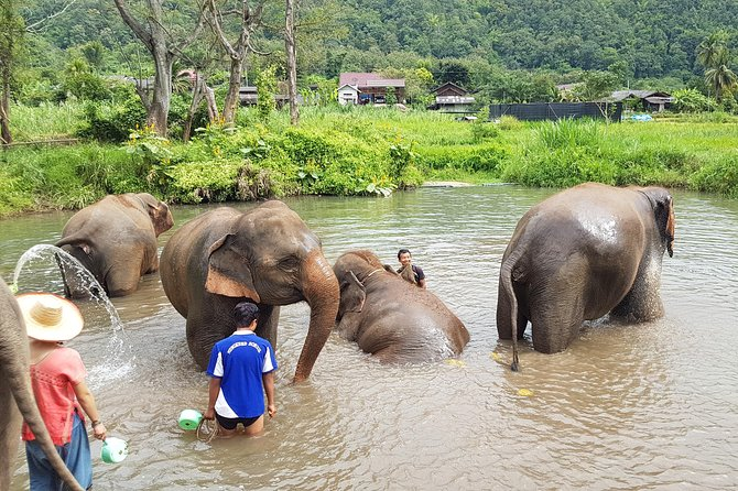 Chiang Mai Elephant and Temples Sanctuary Excursion in Spanish