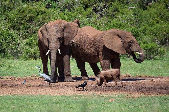 3-Days Tanzania Safari from Arusha