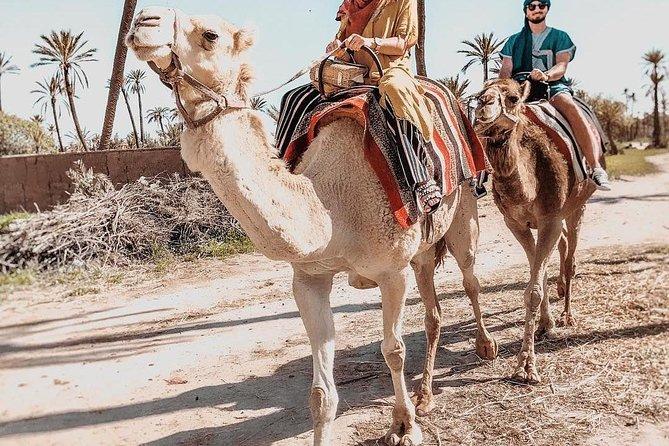 Marrakech Camel Ride Tour in Palm Grove
