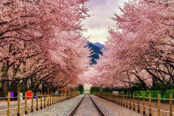 Korea's biggest pear blossom festival, Jinhae Gunhang pear blossom parade photo 3