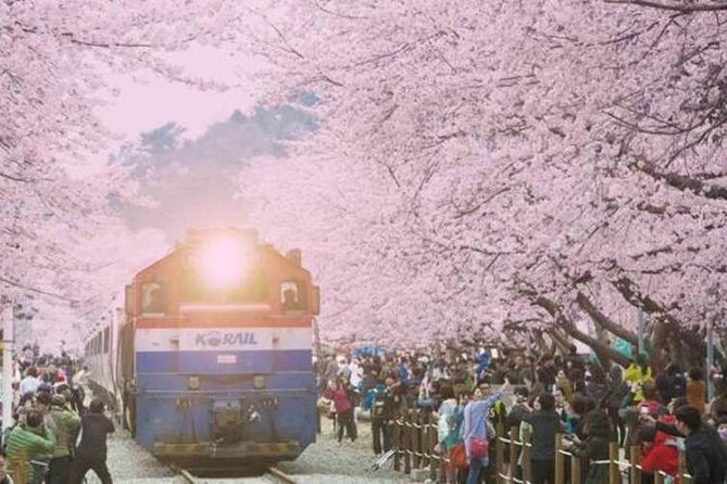 Korea's biggest pear blossom festival, Jinhae Gunhang pear blossom parade photo 4