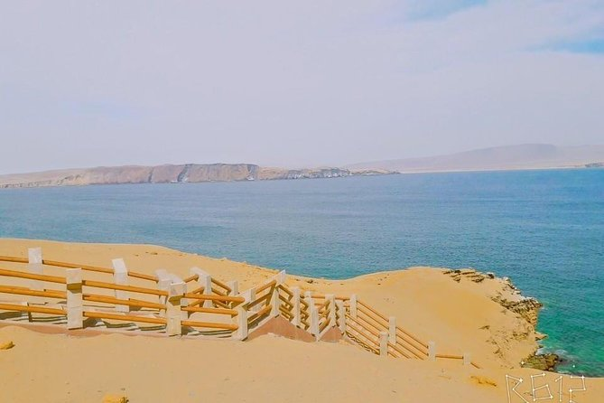 Paracas National Reserve excursion from the San Martín port