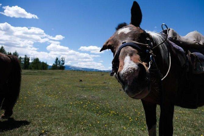 10 Days Horse Trekking, Khentii