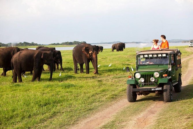 All Inclusive Private day tour to Dambulla, Sigiriya and Minneriya Safari photo 11