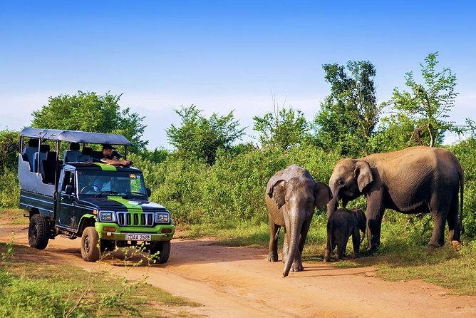 Udawalawe Half Day Safari from Kalutara / Wadduwa / Bentota (Entrance + Lunch)