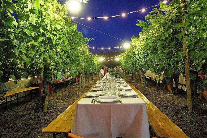 Tuscan dinner in the vineyard