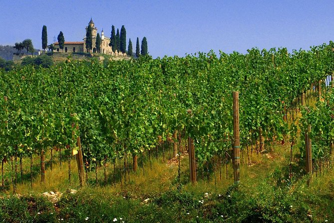 Prosecco wine tour from Venice and Treviso