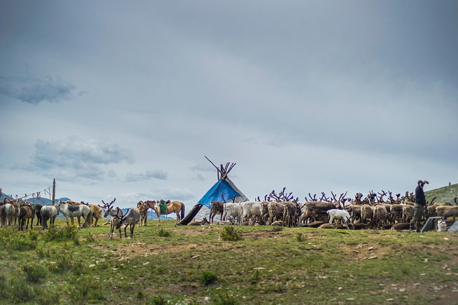 19 Days Horse trekking among the reindeer herders