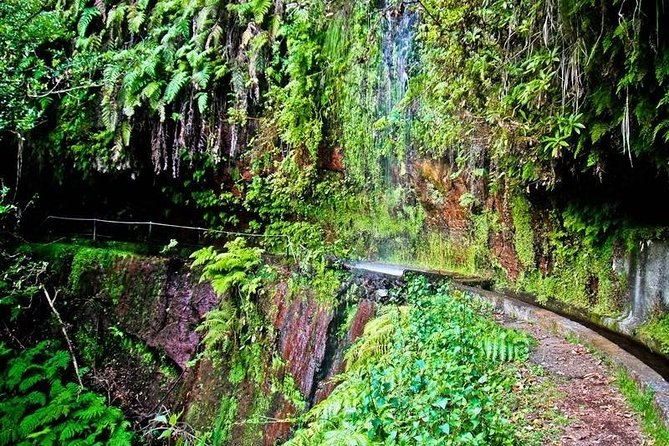 Endemic Levada do Rei Walk photo 3