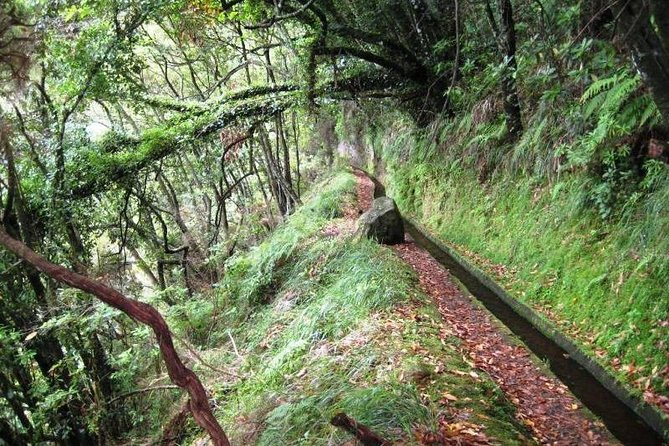Endemic Levada do Rei Walk photo 7