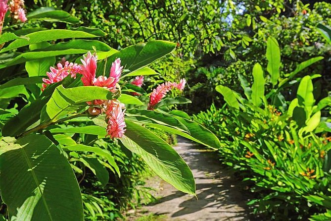 St. Lucia Botanical Gardens and Waterfall Tour (Minimum 4 persons)