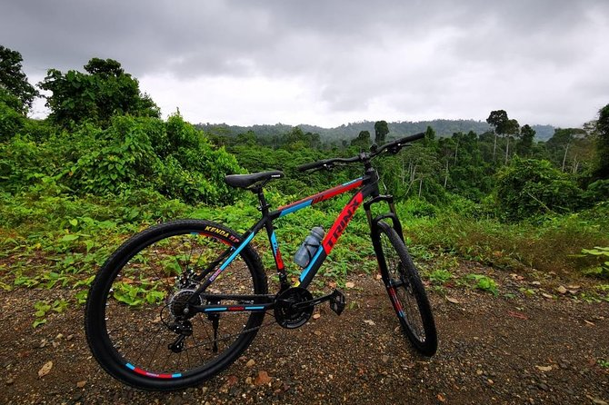 Rain Forest crossing